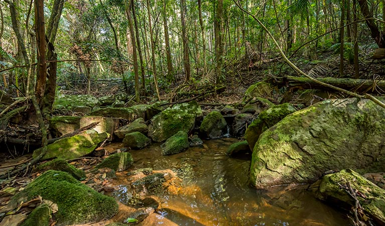 Palm Grove Nature Reserve - Accommodation QLD