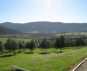 Hastings Valley Olives - Accommodation QLD