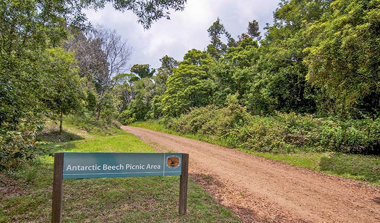 Antarctic Beech picnic area - Accommodation QLD
