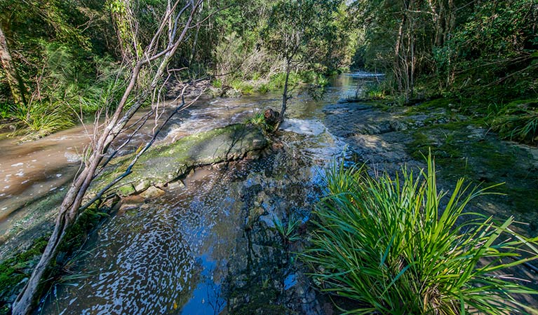 Dawson River walking track - Accommodation QLD