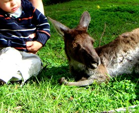 Bunbury Wildlife Park - Accommodation QLD