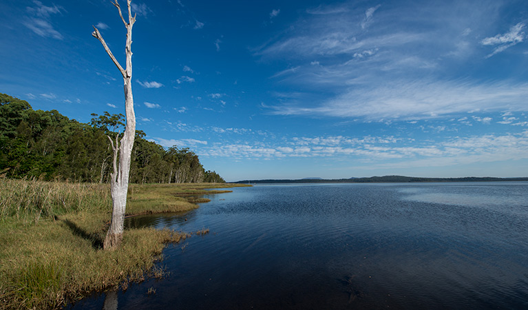 Lake Innes Nature Reserve - Accommodation QLD