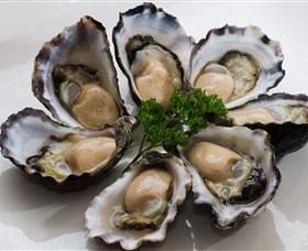 Tathra Oysters - Accommodation QLD
