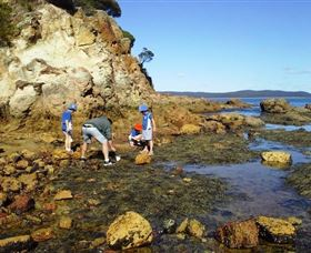 Sapphire Coast Marine Discovery Centre - Accommodation QLD