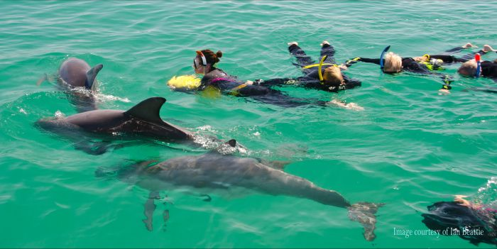 Rockingham Wild Encounters - Swim with Wild Dolphins - Accommodation QLD