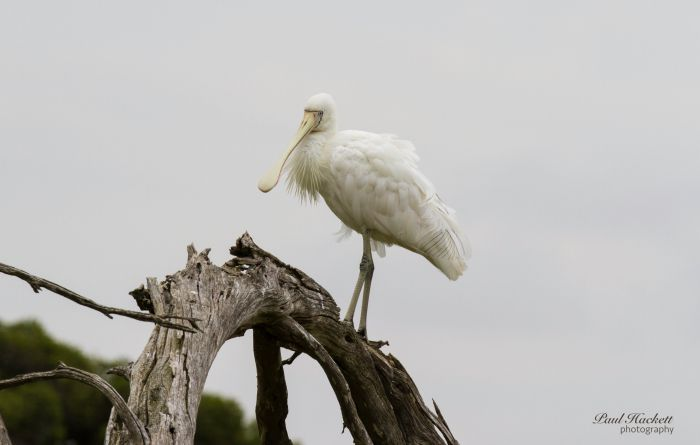 Melbourne Birding Tours - Accommodation QLD
