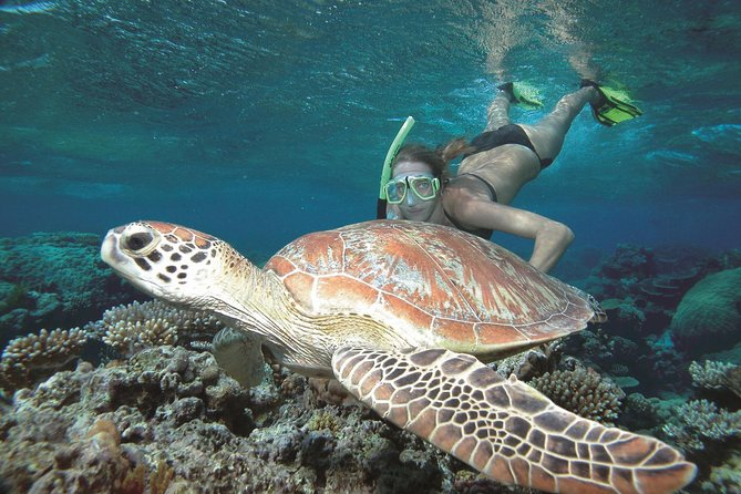 Great Barrier Reef Sailing and Snorkeling Cruise from Port Douglas - Accommodation QLD