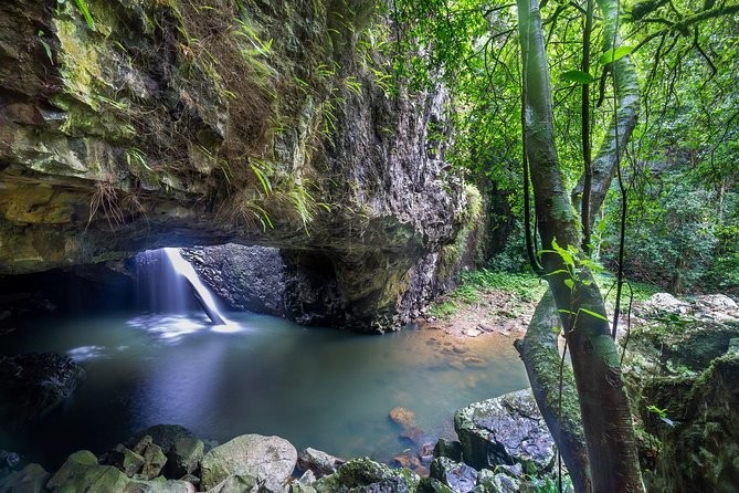 Springbrook and Tamborine Rainforest Tour Including Natural Bridge and Glow Worm Cave - Accommodation QLD