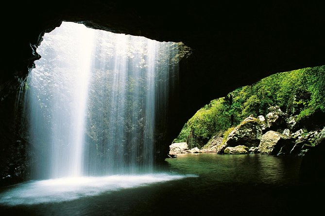 World Heritage Springbrook National Park Tour Including Natural Bridge - Accommodation QLD