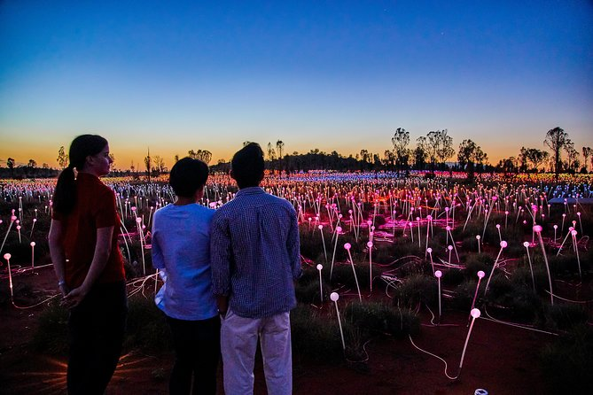 Uluru Field of Light Sunrise Tour - Accommodation QLD