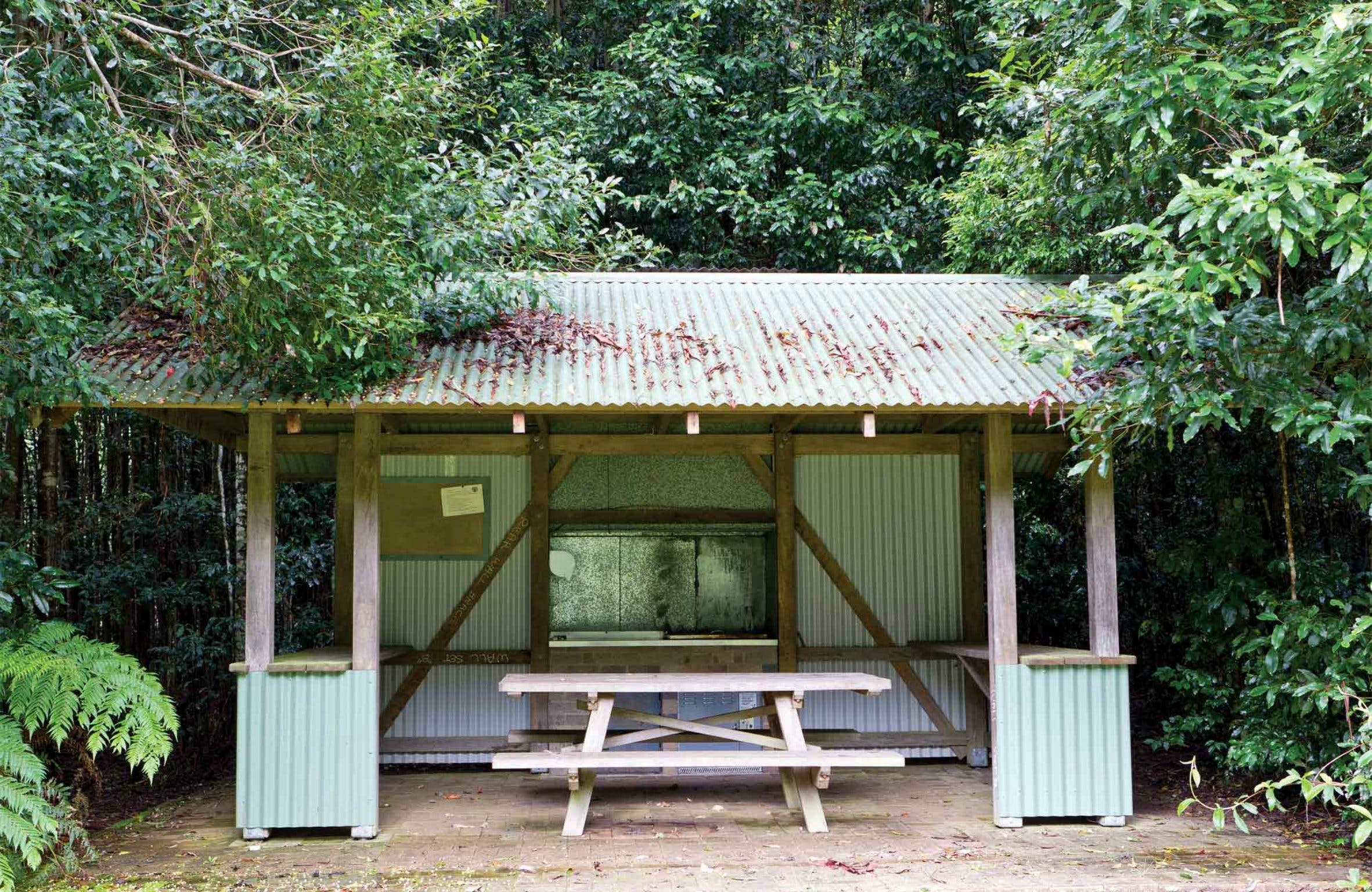 Coachwood Picnic Area - Accommodation QLD