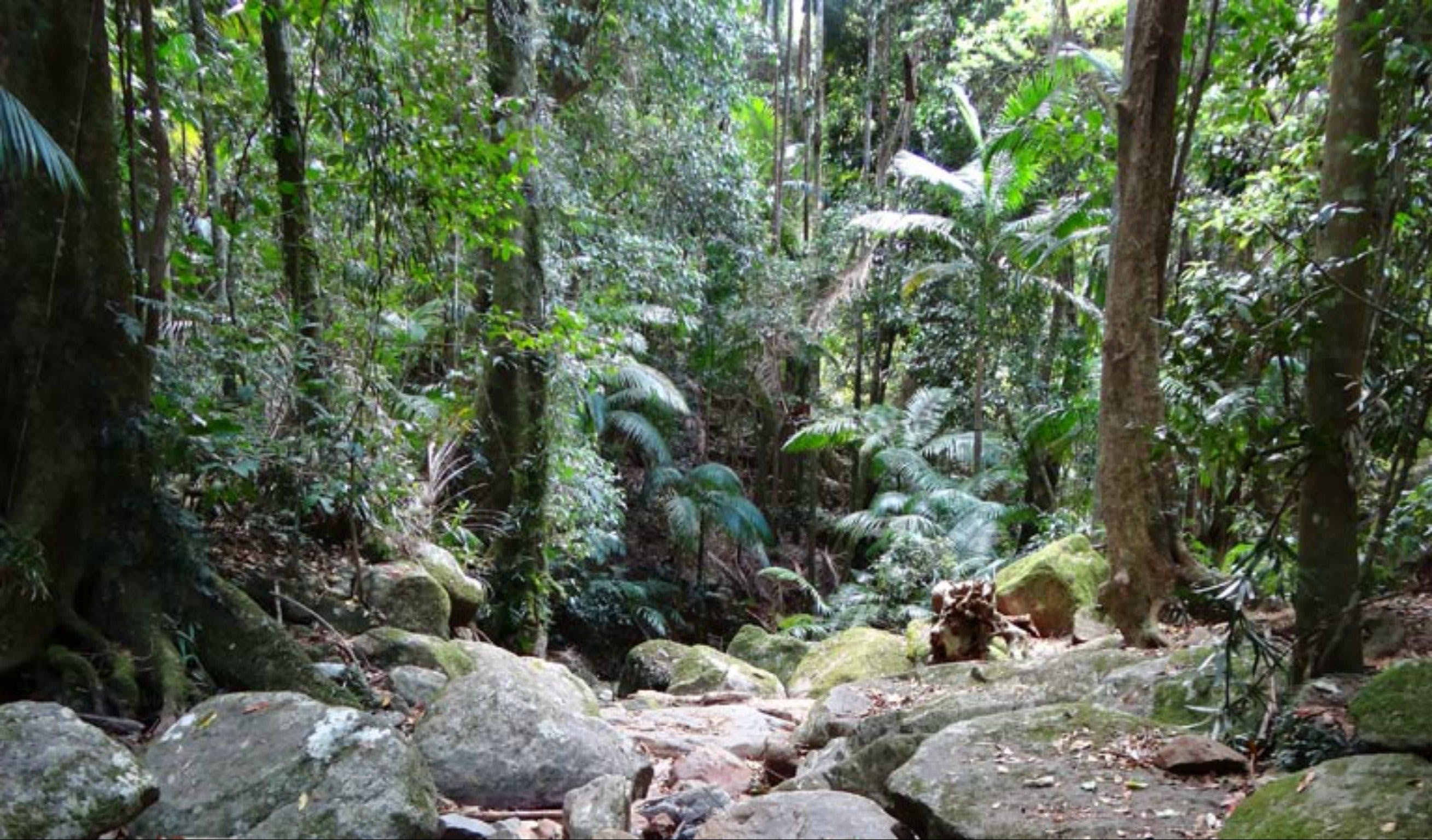 Lyrebird track - Accommodation QLD