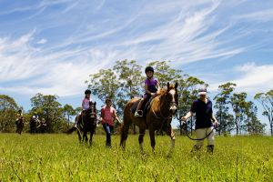 Port Macquarie Horse Riding Centre - Accommodation QLD