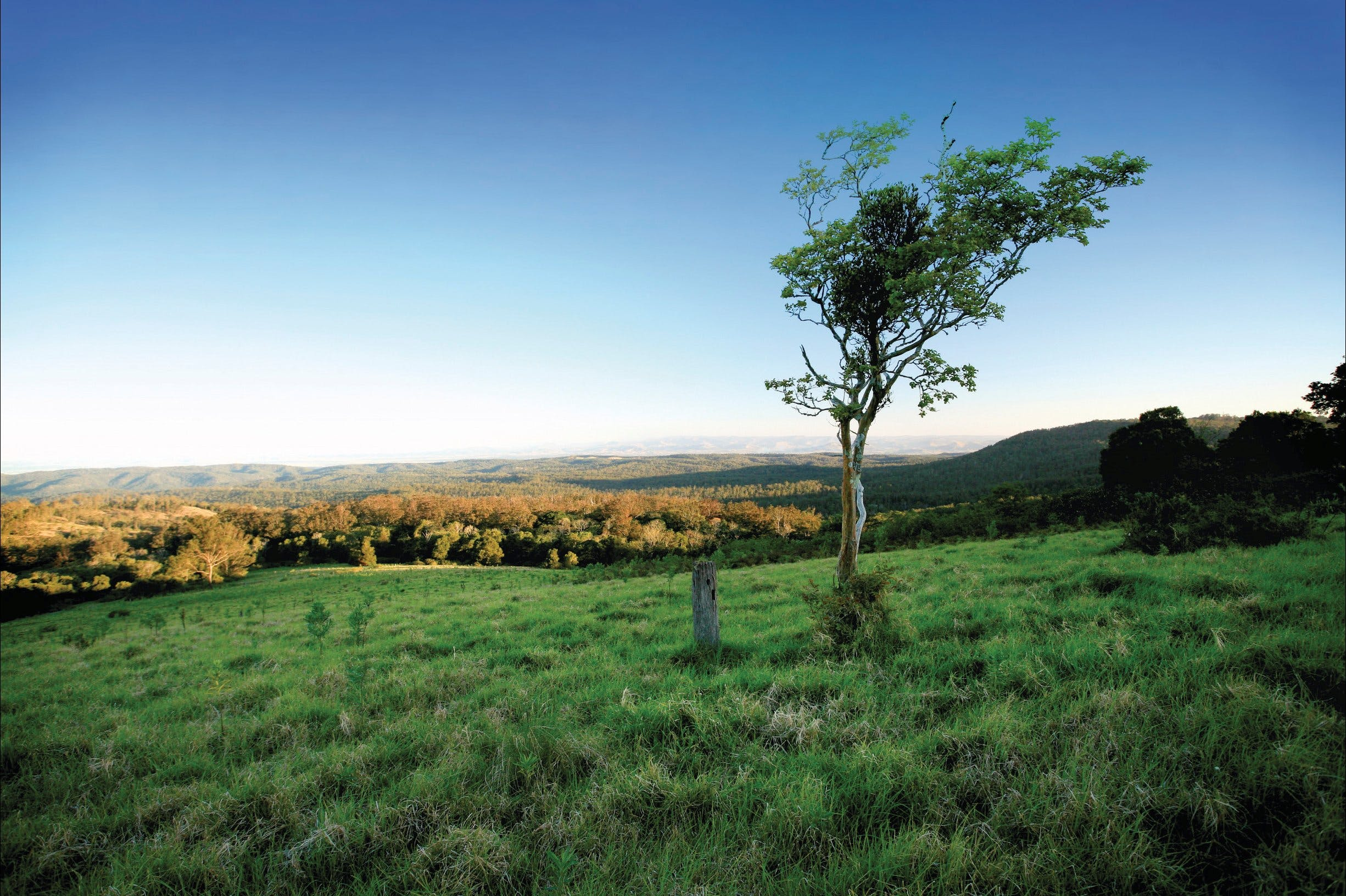 Ravensbourne National Park - Accommodation QLD
