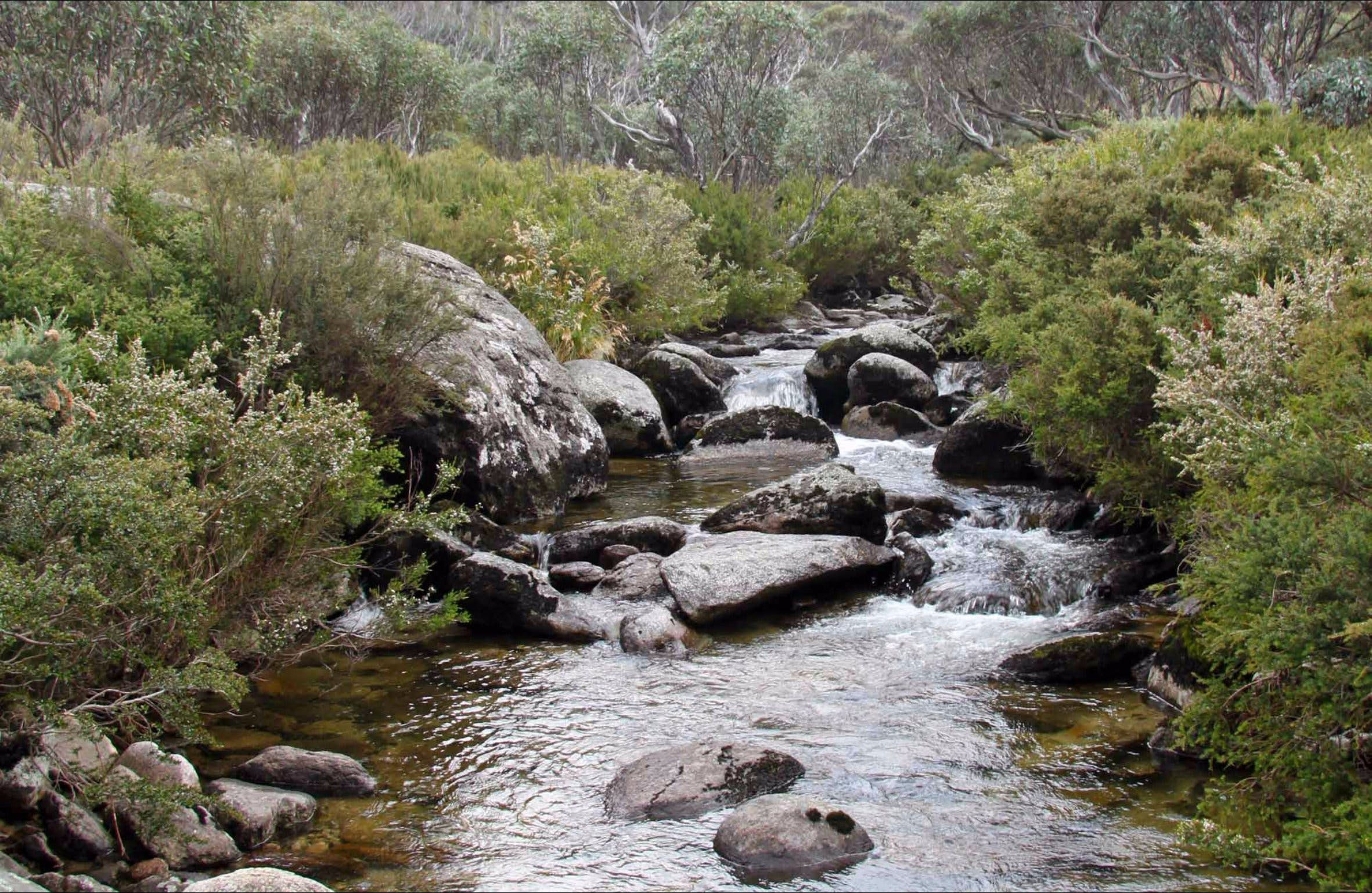 Thredbo River Track - Accommodation QLD