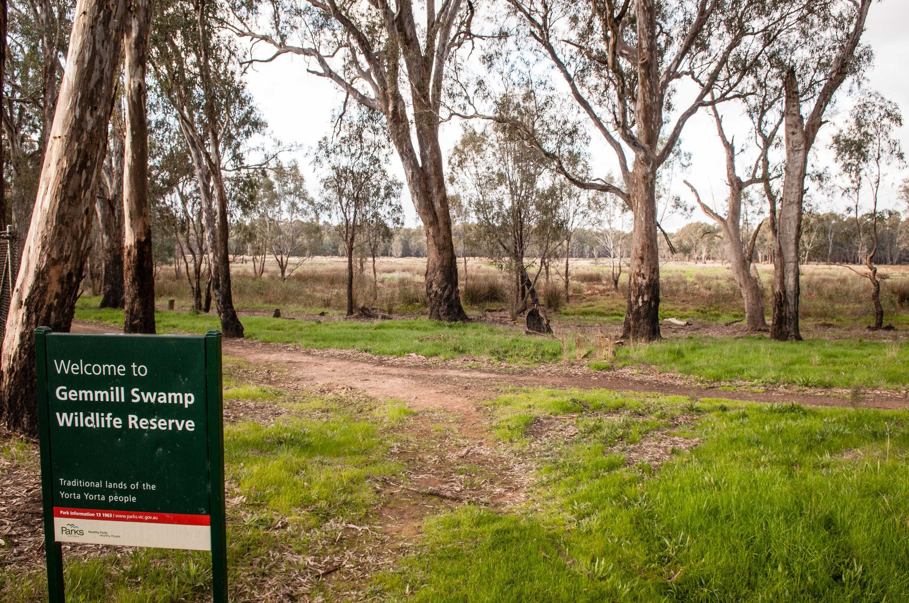 Gemmill Swamp Wildlife Reserve - Accommodation QLD