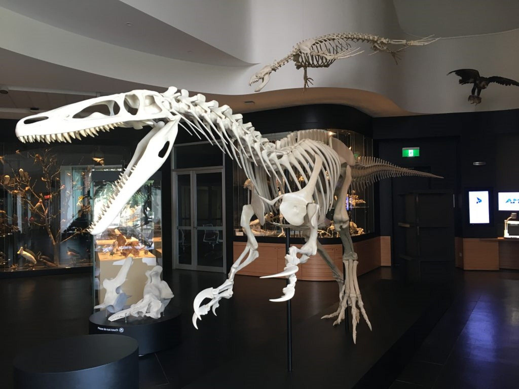 UNE Natural History Museum - Accommodation QLD