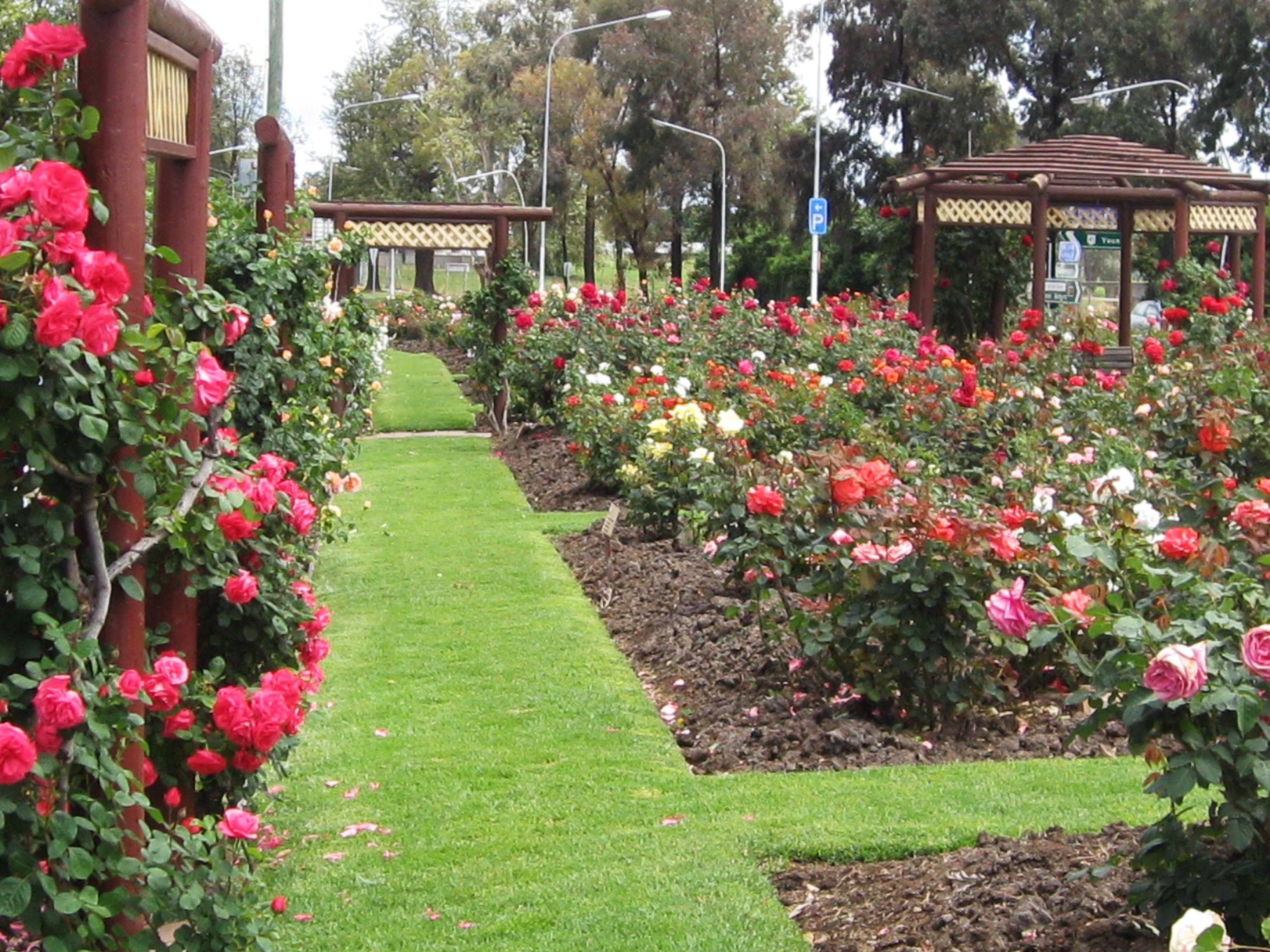 Cowra Rose Garden - Accommodation QLD