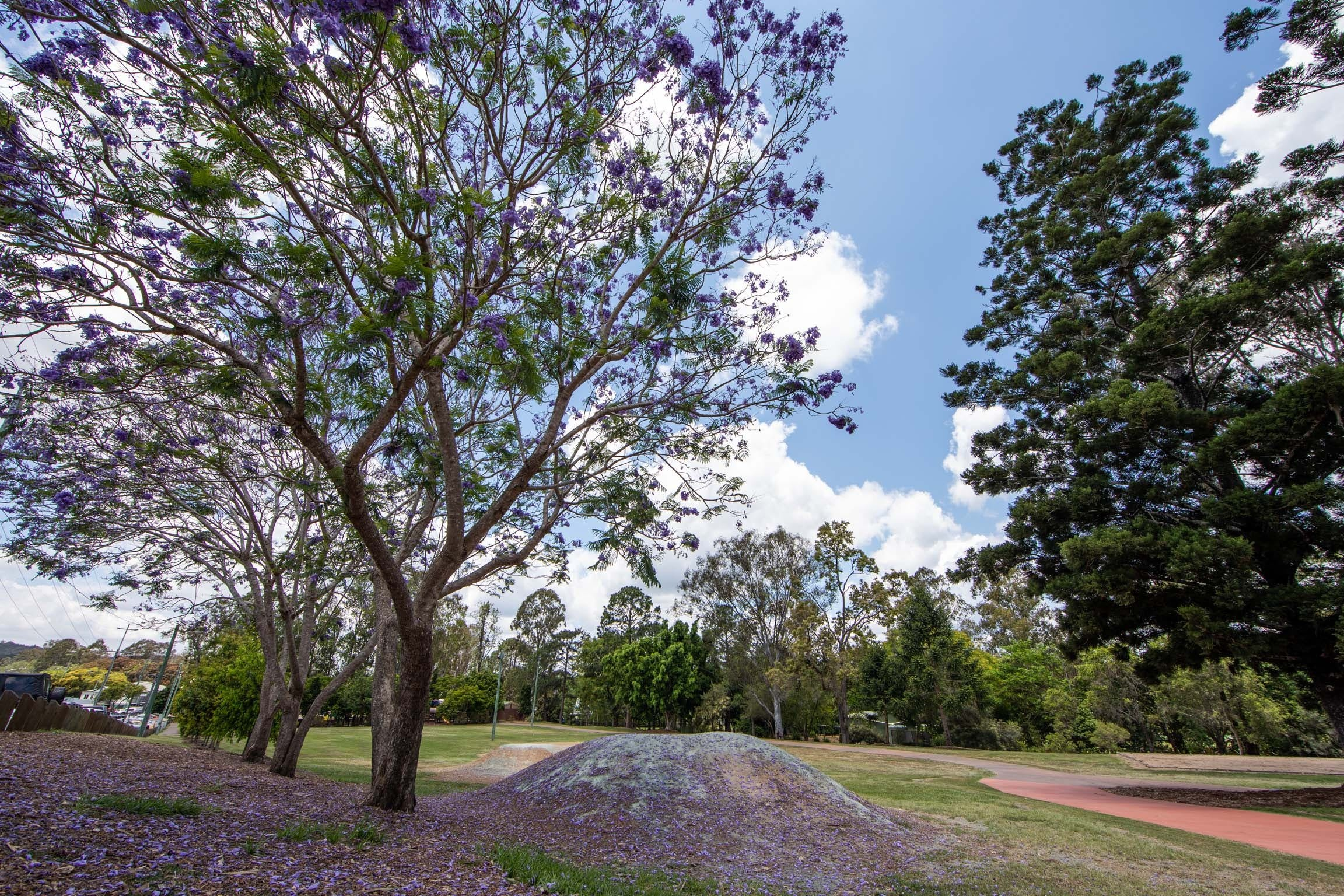 John Scott Park - Accommodation QLD