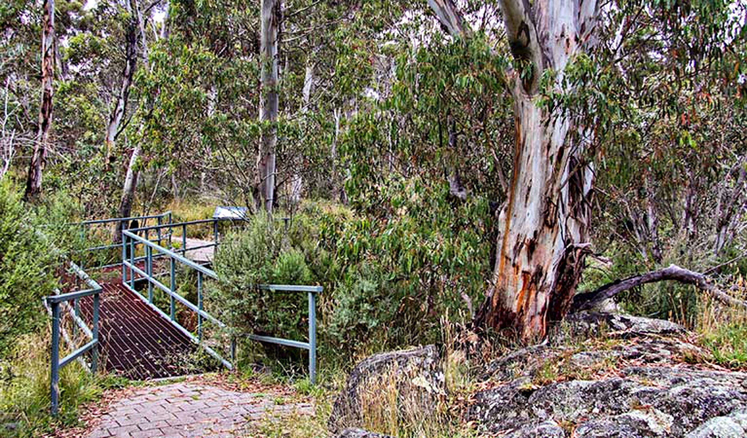 Sawpit Walking Track - Accommodation QLD