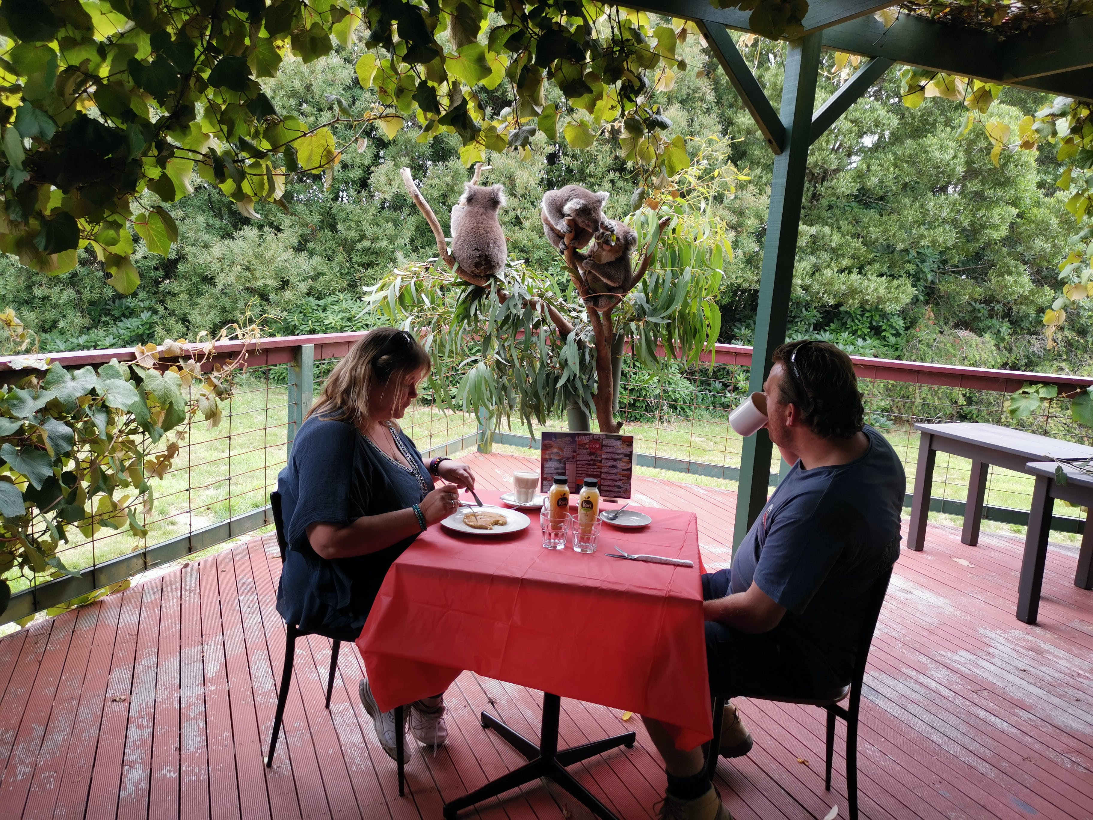The Aussie Stop offering Breakfast with Koalas - Accommodation QLD