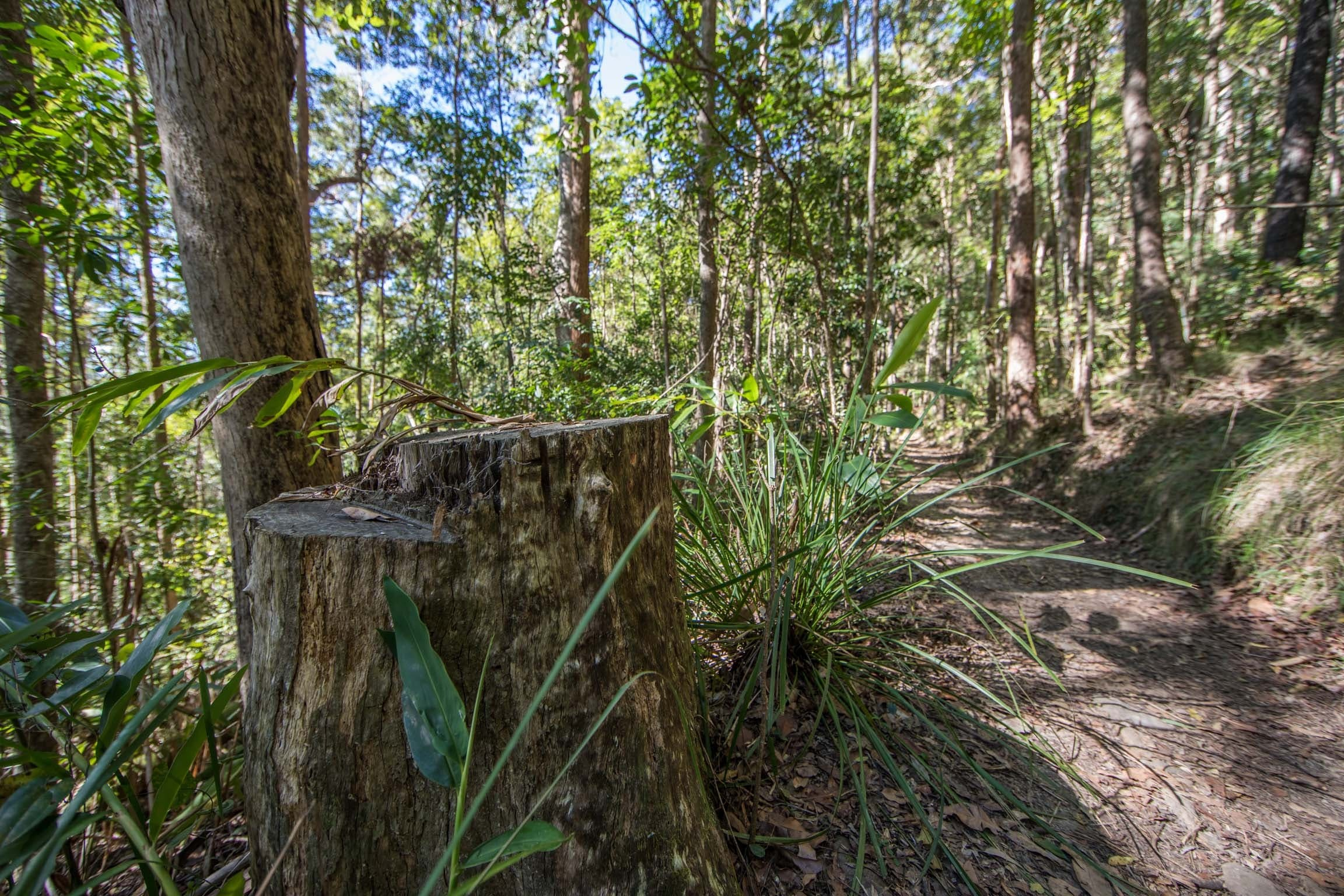 Thylogale Track - Accommodation QLD