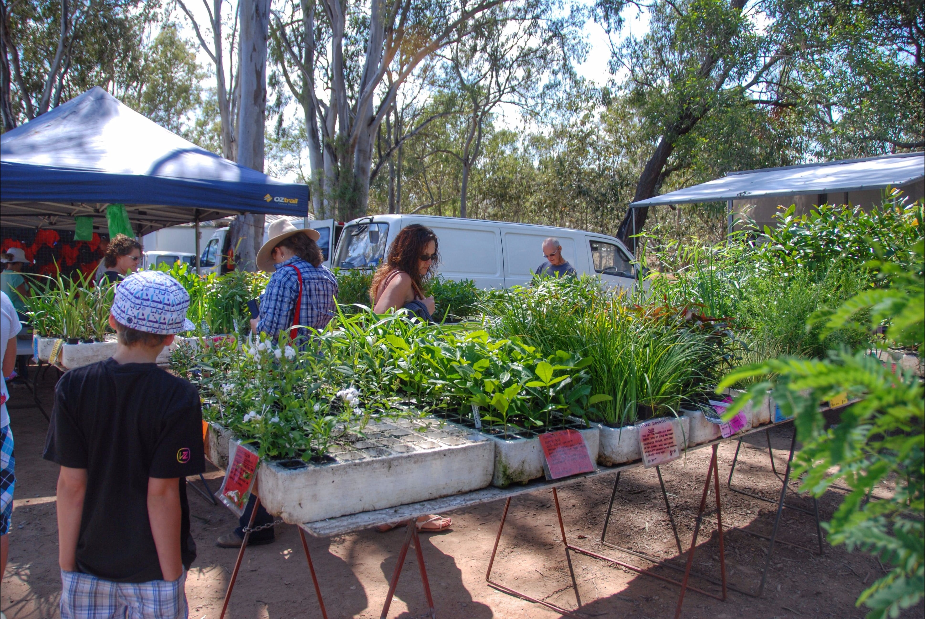 Fernvale Country Markets - Accommodation QLD