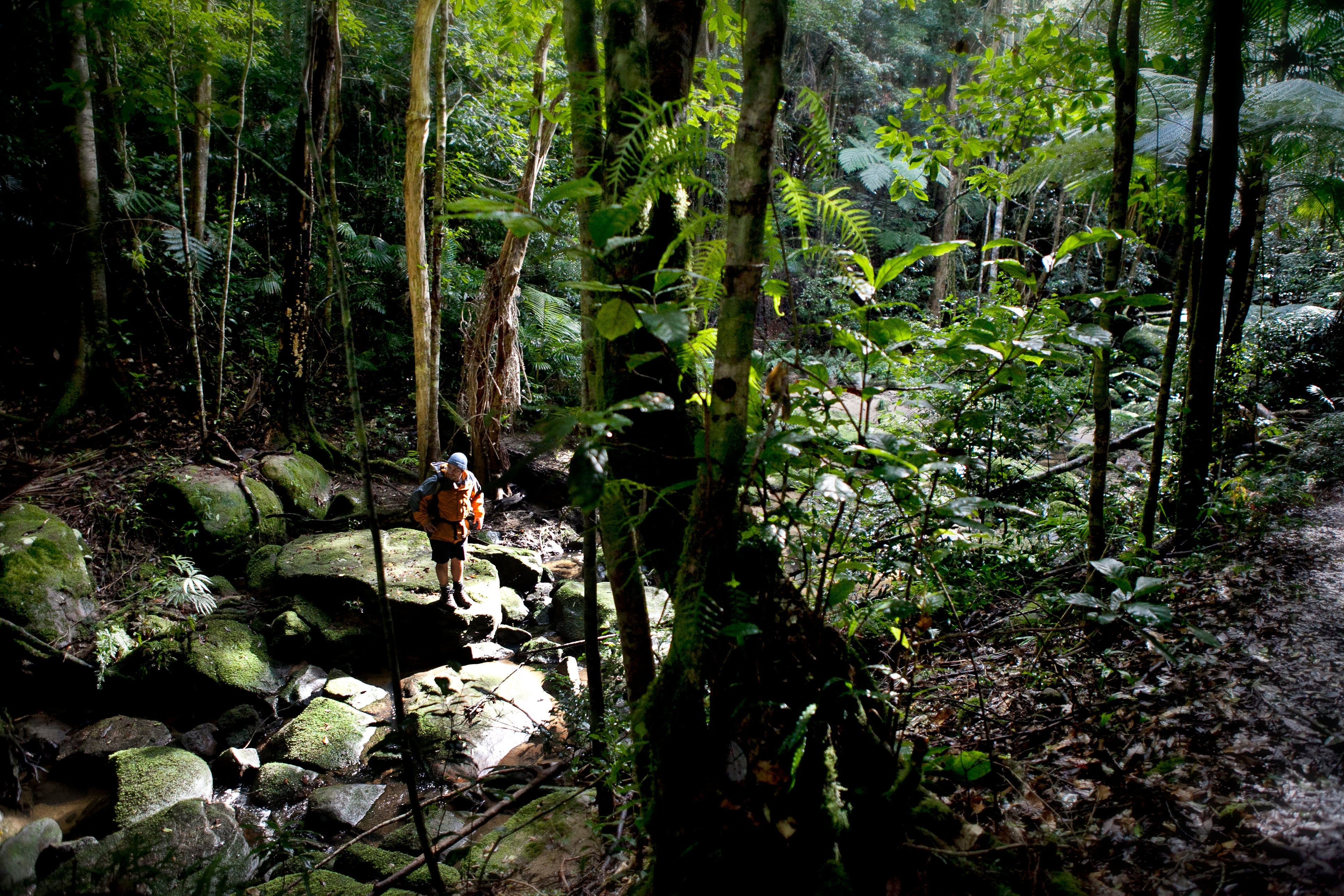 Strickland State Forest - Accommodation QLD