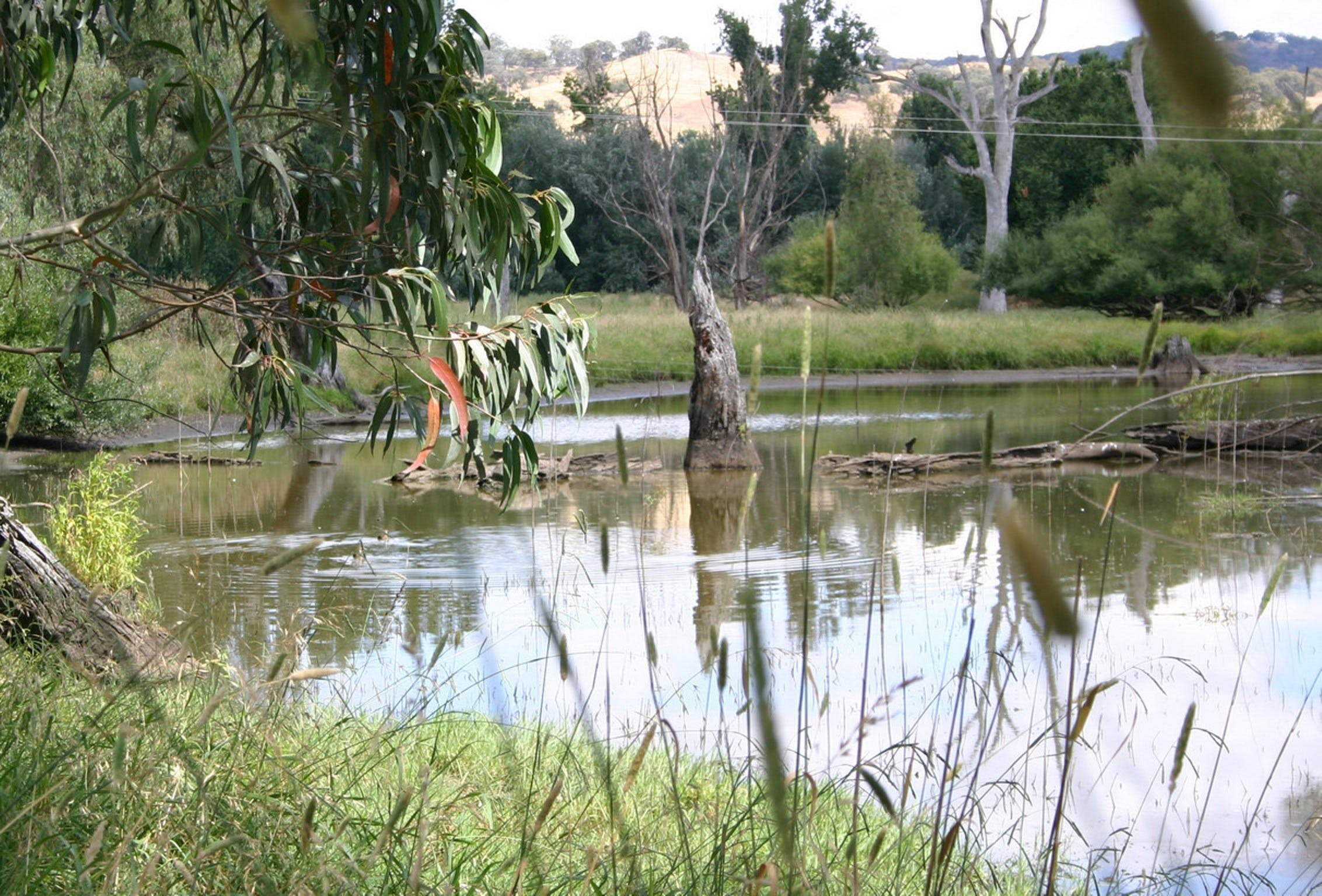 Tumut Wetlands - Accommodation QLD