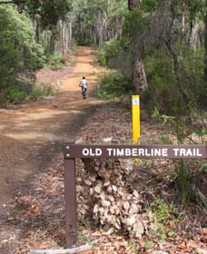 Old Timberline and Sidings Rail Trails - Accommodation QLD