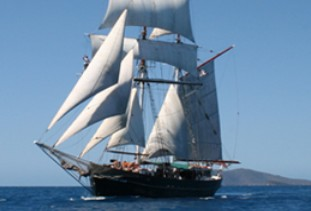 Australian Tallship Cruises - Accommodation QLD