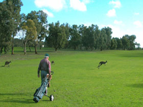 Coffin Bay Golf Club - Accommodation QLD