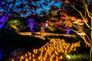 Canberra Nara Candle Festival - Accommodation QLD