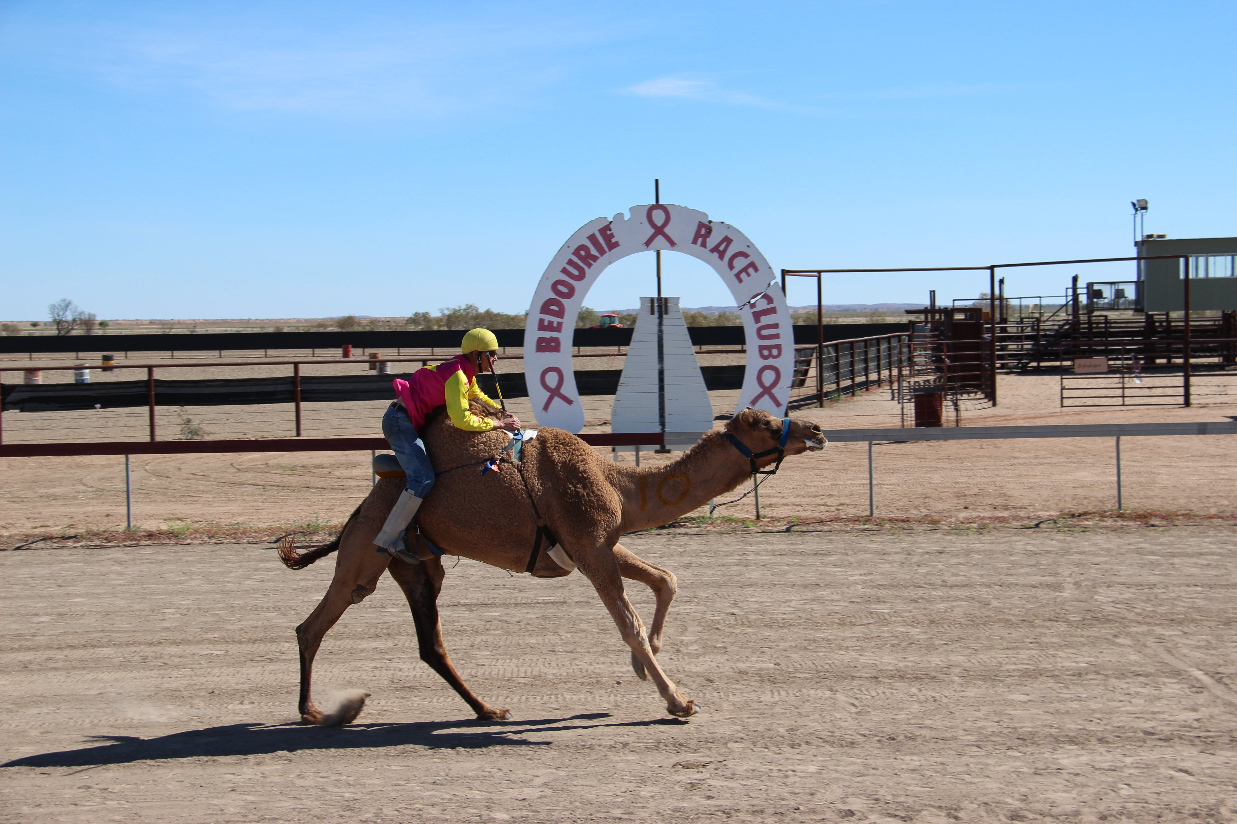 Bedourie Camel and Pig Races and Camp oven Cook-off - Accommodation QLD