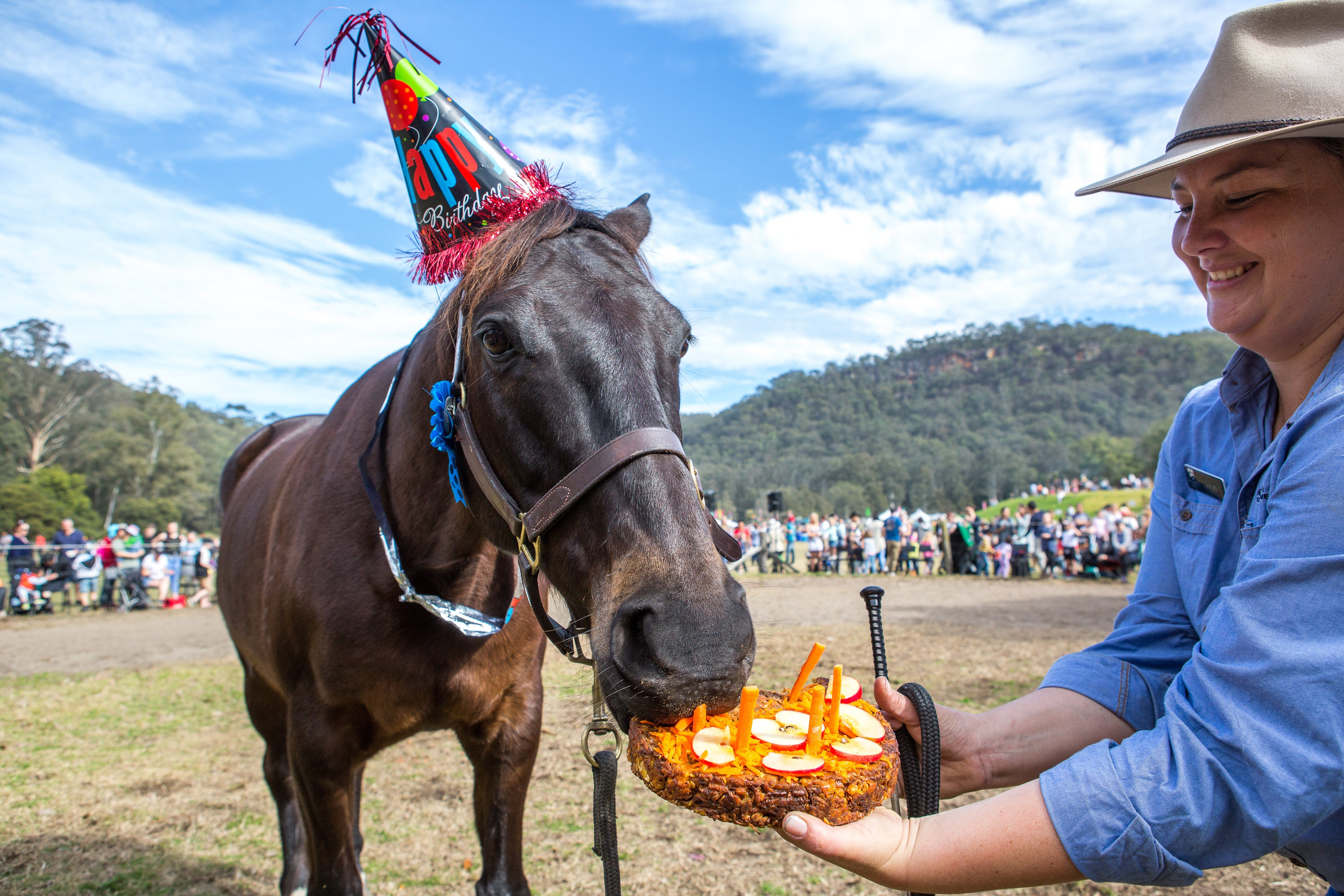 Horses Birthday Festival - Accommodation QLD
