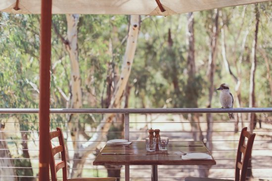 Morrisons Winery  Restaurant - Accommodation QLD