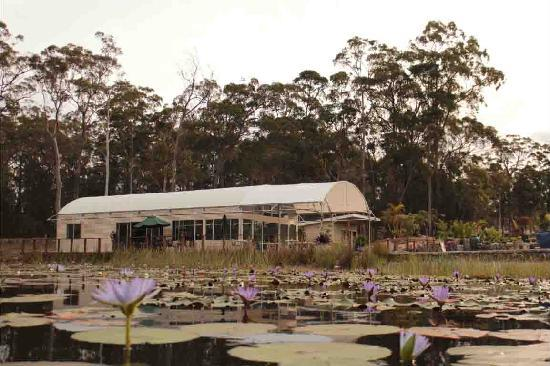 Abundance Cafe and Garden Centre - Accommodation QLD