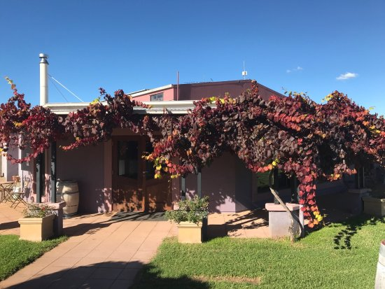 Jester Hill Wines - Accommodation QLD