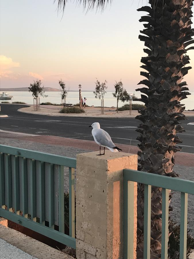 Shark Bay Seafront Apartments - Accommodation QLD