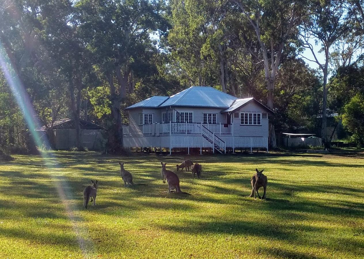 Lake Weyba Noosa Lodge  Kangaroos - Accommodation QLD